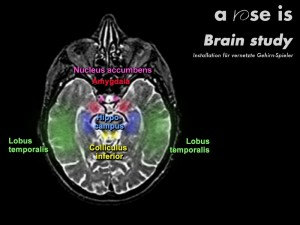 Brain study - funktionales Modell